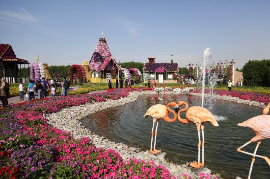 Flamingos Picture of Dubai Miracle Garden Dubai TripAdvisor
