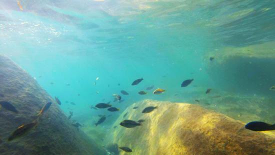 Domwe Island Adventure Camp Image
