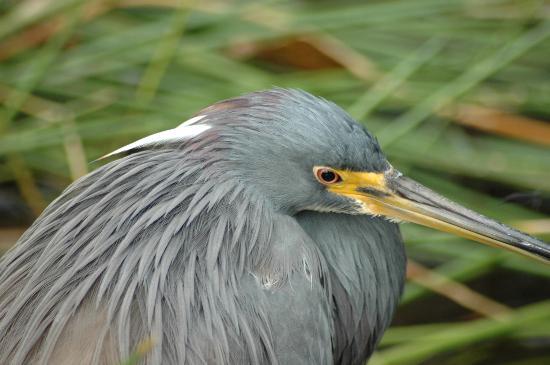 Wakodahatchee Wetlands: beautiful