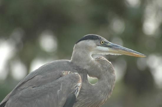 Wakodahatchee Wetlands: Intense