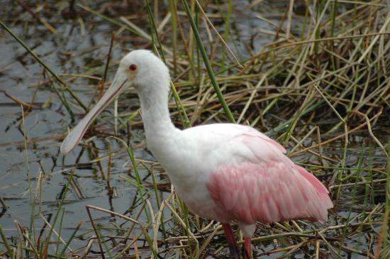 Wakodahatchee Wetlands: Beautiful colors