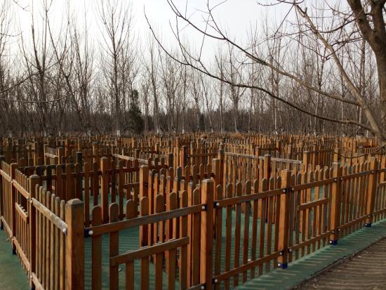 Tanggu Forest Park