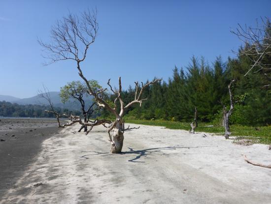 Diglipur Beach
