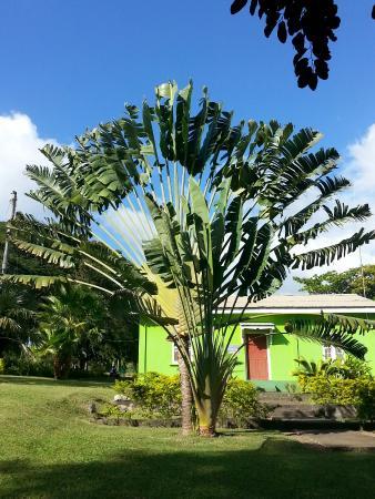Розо, Доминика: 20160128_151623_large.jpg
