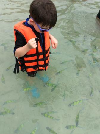Kota Phuket, Thailand: My 4 year old feeding the fish!