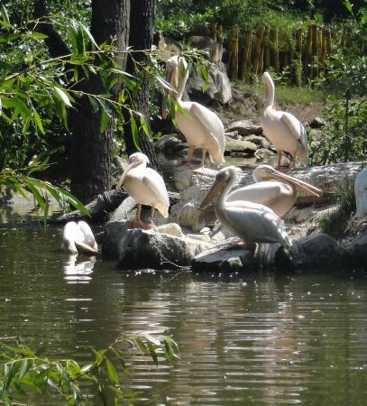 Zlin, Tsjechië: hejno pelikánů