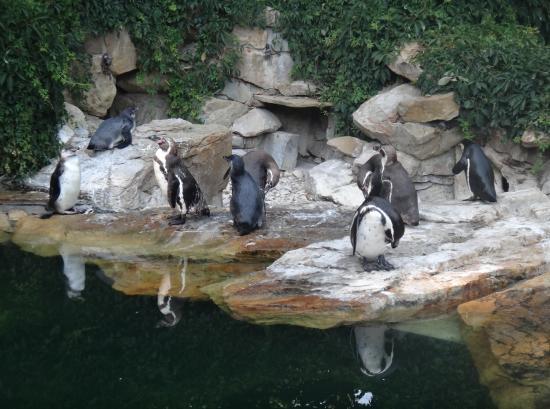 Zlin, Tsjechië: tučňácí rodinka