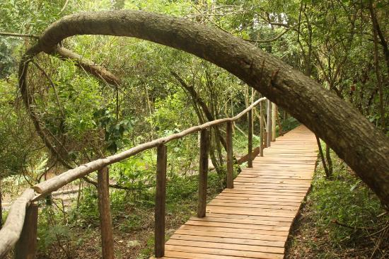 Tsitsikamma National Park, Sudáfrica: The path to the luxury tent