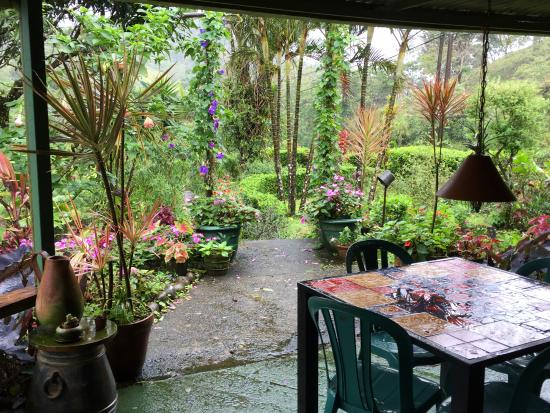 Nuevo Arenal, Costa Rica: Gallery & cafe grounds