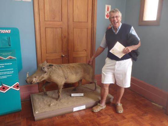 Grahamstown, Sudafrica: Warthog