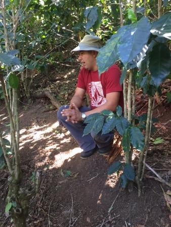 Atenas, Costa Rica: Gabriel explained how shade trees and fruit trees aided in the growth of healthy coffee plants.