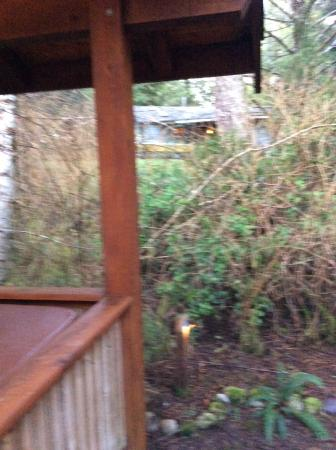 Evergreen Forest Cabins: Not so private