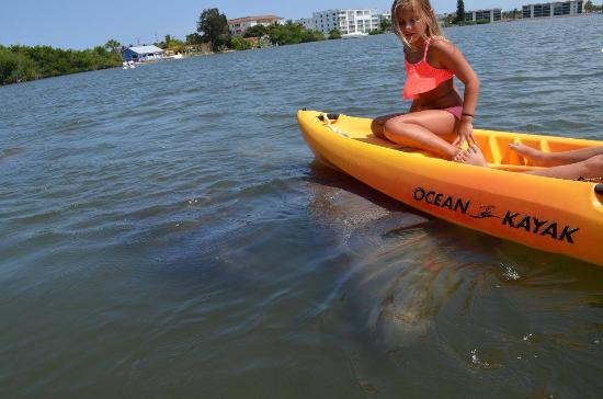 Wildlife Watersports Up Close With A Manatee