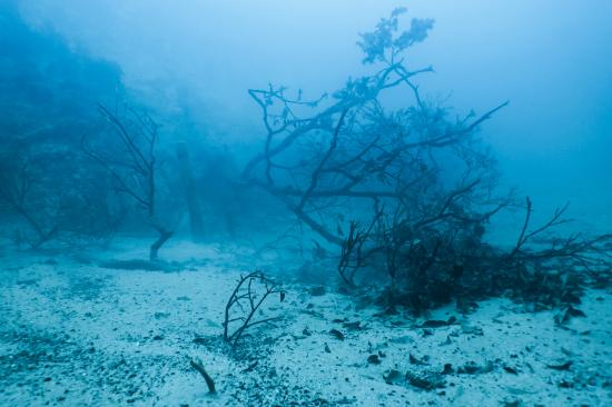 Barracuda Lake: sunken trees add a surreal touch to the landscape