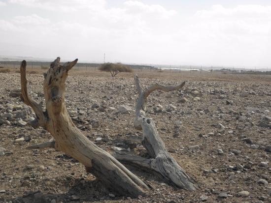 Mahane Zofar, Israël : החווה