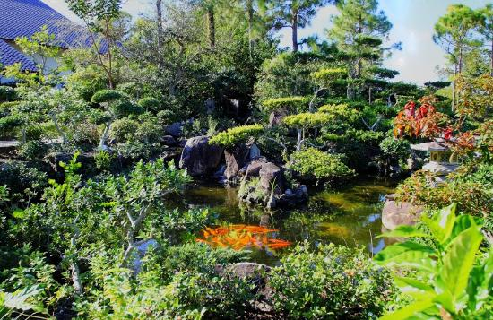 Koi pond at the Museum entrance - Picture of Morikami Museum ...