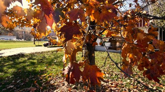 Ironton, MO: Fall leaf view from property