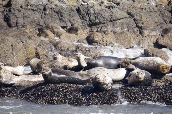 Avila Beach, Califórnia: Sea lions