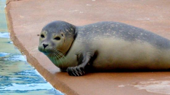 foczka picture of natureland seal sanctuary skegness tripadvisor rh tripadvisor ie