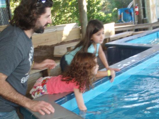 Florida Oceanographic Coastal Center : Petting the rays