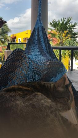 El Acuario Hotel: Resident kitty shared my hammock with me!