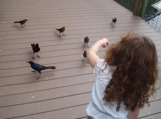 Melbourne, Flórida: Feeding the birds