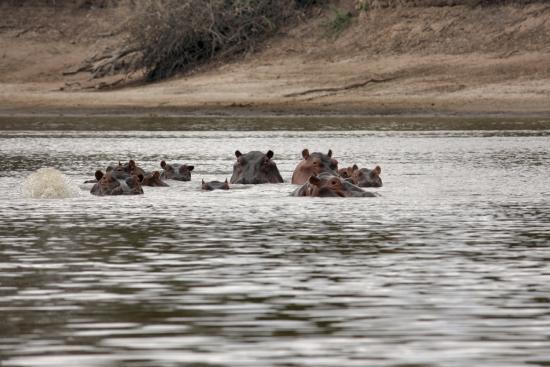 Región de Arusha, Tanzania: Familie hippo wenst u een fijne dag...