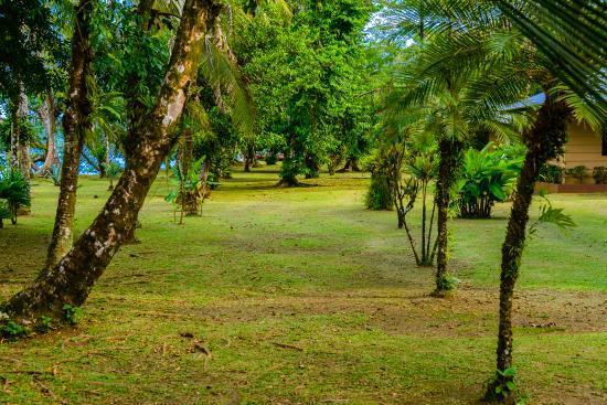 Manatus Hotel: Jardines Hotel Manatus