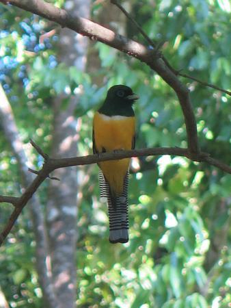 Osa Green Travel: Birds galore!