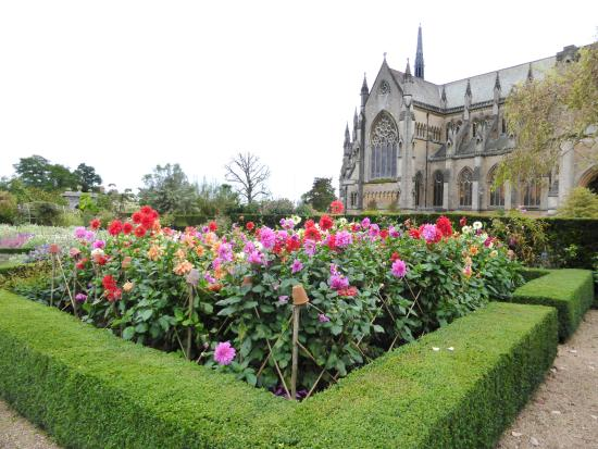 Dahlias Flowering in the Cutting Garden and a View of Arundel Cathedral