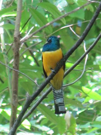 Puerto Jimenez, Kostaryka: Birds galore!