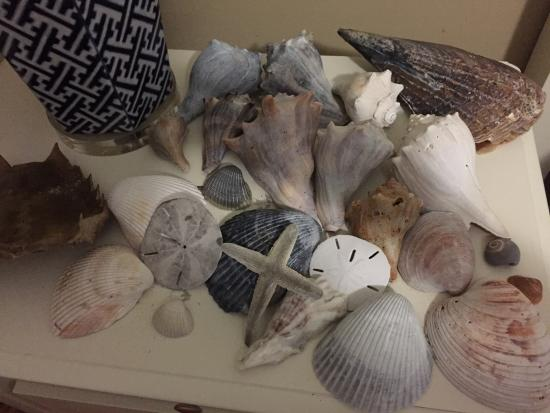 Edisto Island, Южная Каролина: Our haul from Wilkinsons Landing (Shell island) on one of the bedside tables.