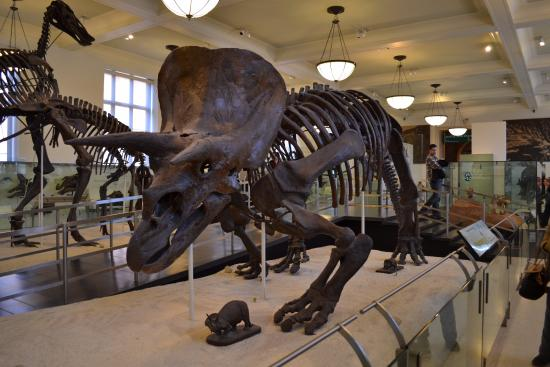 Tour Guide At Museum Of Natural History