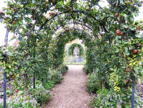 Arundel, UK: Espaliered Fruit Trees on the Pergola