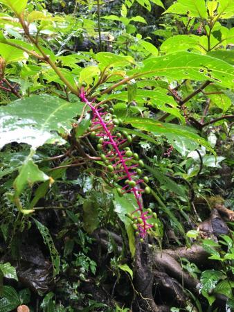 Monteverde Cloud Forest Reserve, كوستاريكا: photo1.jpg