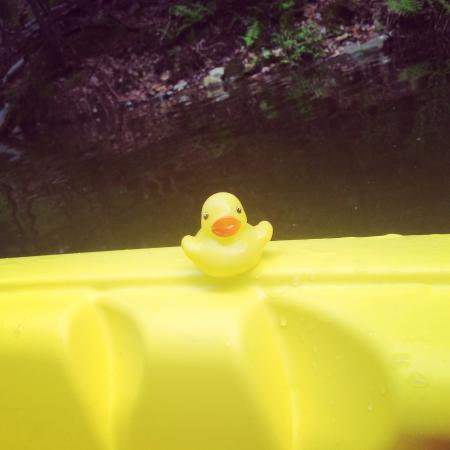 Dartmouth, Canadá: We found this ducky while kayaking in the canal
