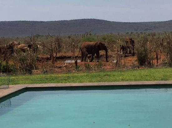 Madikwe Game Reserve, Sudáfrica: Pool area next to waterhole