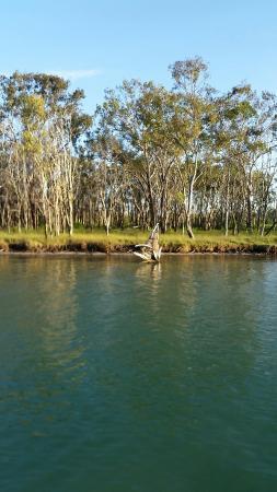 Tewantin, Австралия: 20151230_174859_large.jpg
