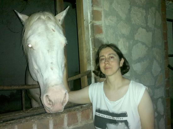 Palomino Ranch Hotel: Con uno de los hermosos caballos de la caballeriza del rancho