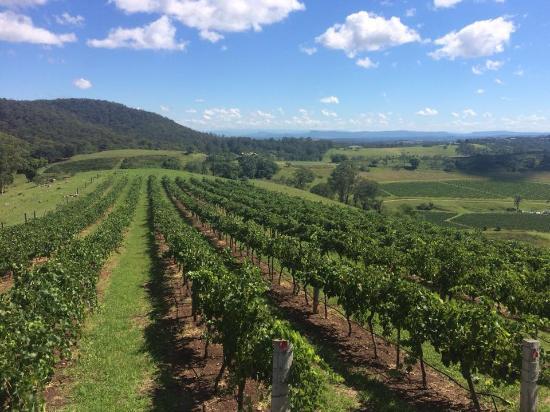 Pokolbin, Australia: Eagles Rest Vineyard 1