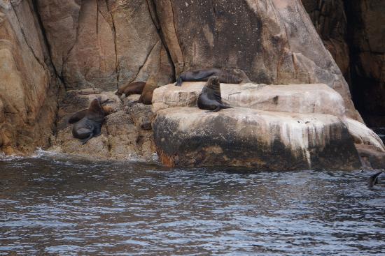 Coles Bay, Australie : Seals