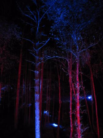 Pitlochry, UK: Beautiful lighted trees!