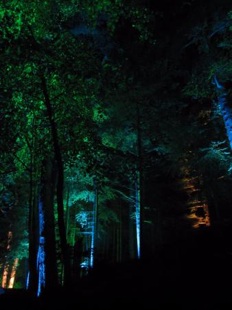Pitlochry, UK: Colors in these enchanted woods!