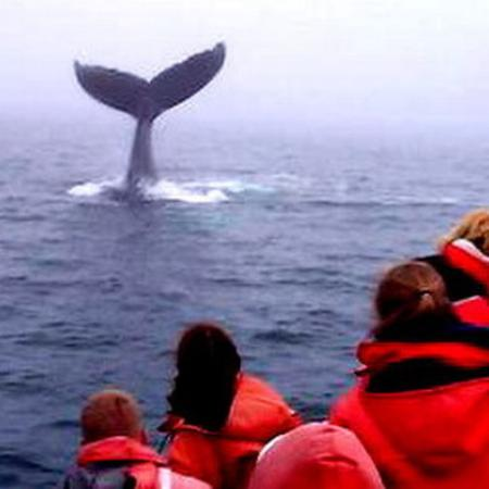 Digby, Kanada: Whale Watching on the Bay of Fundy