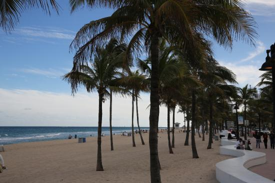 Fort Lauderdale Fl Usa Beach Las Olas