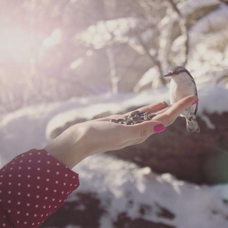 Гора Церковка: Если долго стоять не шевелясь, птички будут брать семечек из рук.