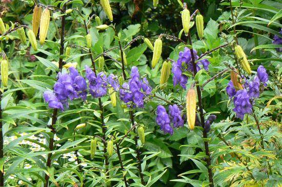 Puyuhuapi, Chili: Flor del Antejardín