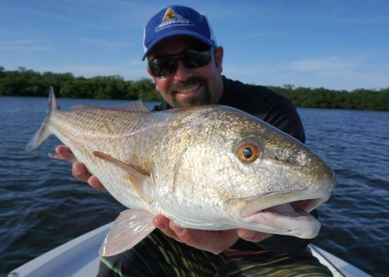 Ruskin, FL: Redfish