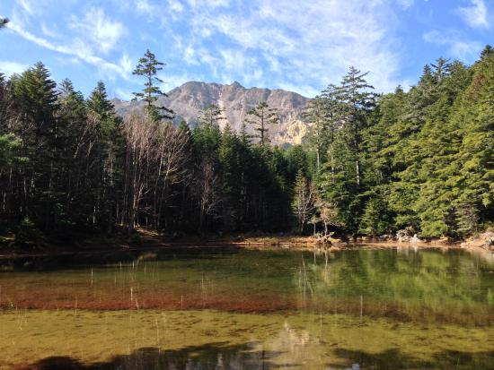 Minamimaki-mura, Japan: 小屋の前のみどり池