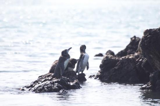 Puerto Villamil, Équateur : On Las Tintereras